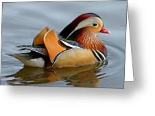 Mandarin Duck Swimming Greeting Card