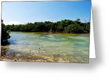 Mangrove @ Safehaven Sound Greeting Card