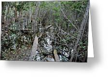 Mangrove 001 Greeting Card
