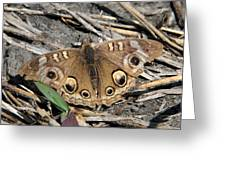 Mangrove Buckeye  Greeting Card