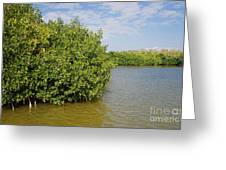 Mangrove Fores Greeting Card by Carol Ailles