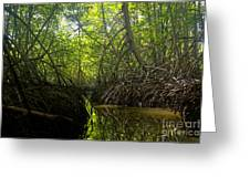 mangrove forest in Costa Rica 1 Greeting Card