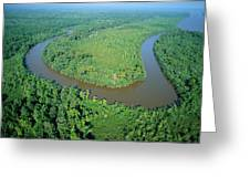 Mangrove Forest In Mahakam Delta Greeting Card