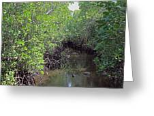 Mangrove Forest Greeting Card by Tony Murtagh