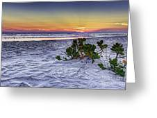 Mangrove On The Beach Greeting Card