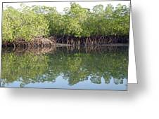 Mangrove Refelections Greeting Card