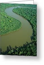Mangrove Rhizophora Sp In Mahakam Delta Greeting Card