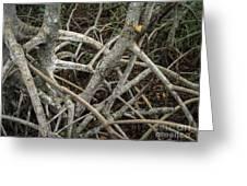Mangrove Roots 1 Greeting Card