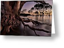 Mangrove Roots Greeting Card