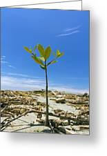 Mangrove Seedling On A Beach Greeting Card