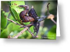Mangrove Tree Crab Greeting Card