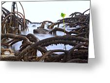 Mangrove Tree Roots Detail Greeting Card