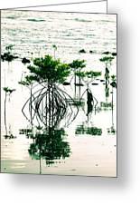 Mangroves Greeting Card