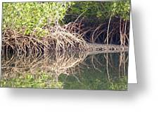 Mangroves In The Gambia Greeting Card