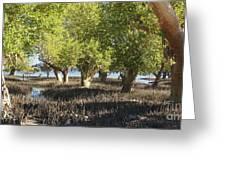 mangroves Madagascar 3 Greeting Card