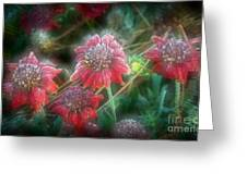 Manipulated Scarlet Quartet Greeting Card