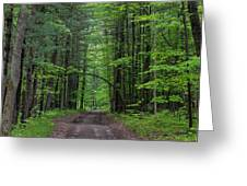 Manistee National Forest Michigan Greeting Card
