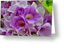 Mansoa Alliacea Greeting Card