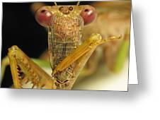 Mantis Dinner Greeting Card