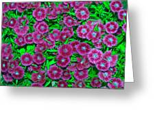 Many Blooms Greeting Card