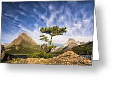 Many Glacier Tree Greeting Card
