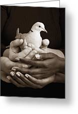 Many Hands Holding A Dove Greeting Card