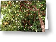Many Orange On Tree Greeting Card