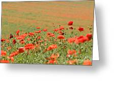 Many Poppies Greeting Card