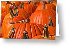 Many Pumpkins In A Row Art Prints Greeting Card
