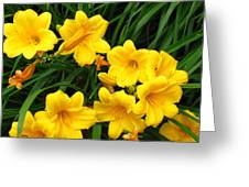 Many Summer Lillies Greeting Card