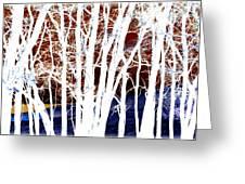 Many Trees Greeting Card