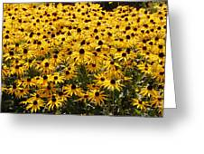 Many Yellow Blooms Greeting Card