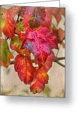 Maple Colors Greeting Card