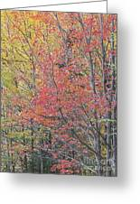 Maple Corner Foliage Greeting Card