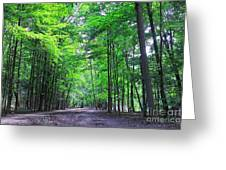 Maple Forest Greeting Card