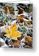 Maple Frost Leaf Art Greeting Card