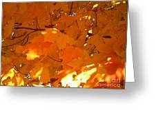 Maple Gold Greeting Card