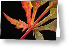 Maple Leaf Detail Greeting Card