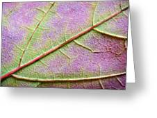 Maple Leaf Macro Greeting Card