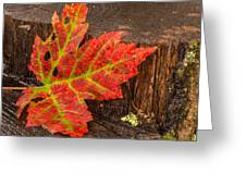 Maple Leaf On Oak Stump Greeting Card