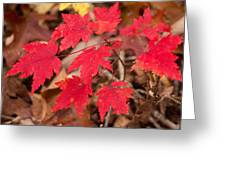 Maple Leaf Palette Greeting Card