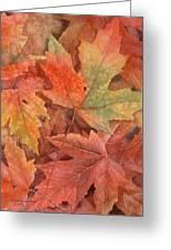 Maple Leaf Rag Greeting Card