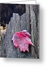 Maple Leaf - Uw Arboretum - Madison Greeting Card