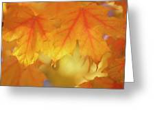 Maple Leaves (acer Saccharum) Greeting Card