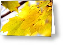 Maple Leaves At Autumn Glory 1 Greeting Card