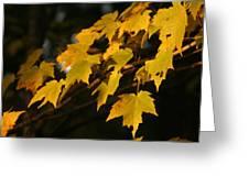 Maple Leaves - B Greeting Card