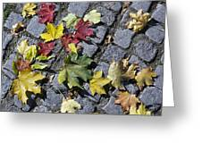 Maple Leaves On Stones Greeting Card