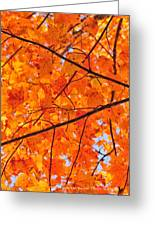 Maple Leaves Orange Yellows 2879 Greeting Card