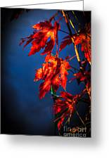 Maple Leaves Shadows Greeting Card