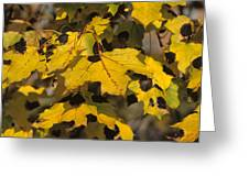 Maple Leaves With Tar Spot Greeting Card